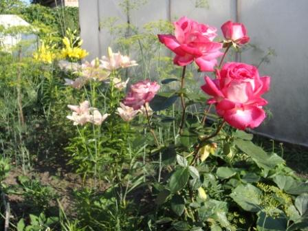 Садовый цветы (12 фото)