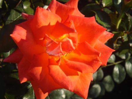 Садовые цветы (12 фото)