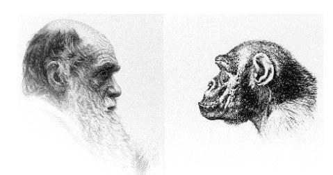 Карикатуры на тему эволюции