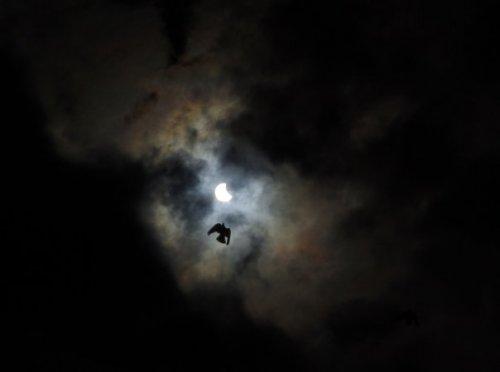 Ночной Че