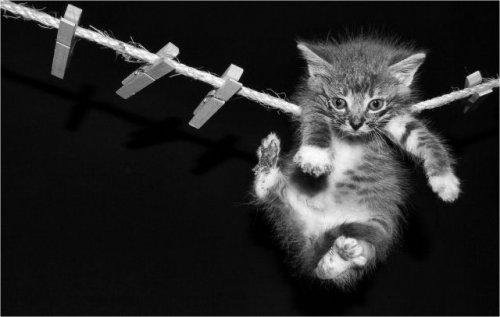 Кошачьи суразности )