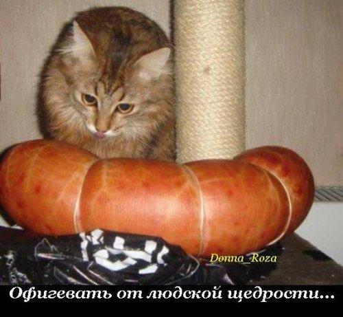 Котэ - свод обязанностей )