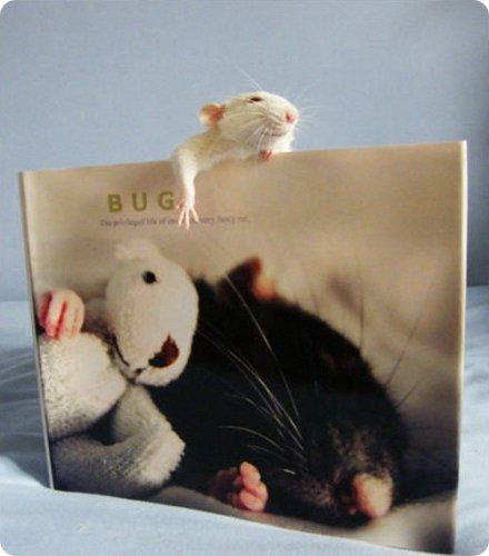 Крысота!