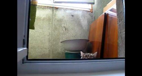 Кот партизан!