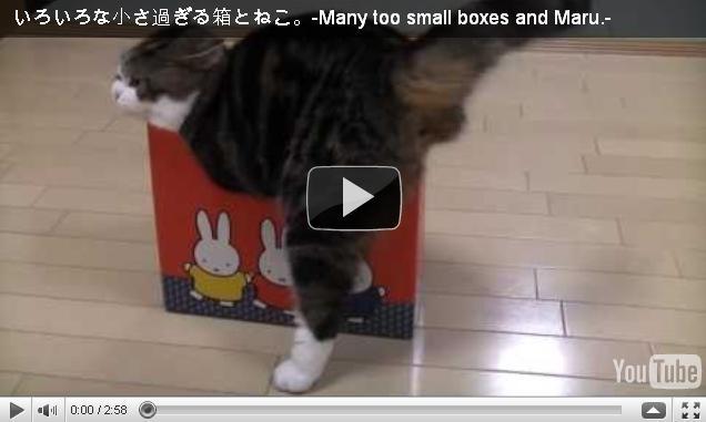 Кот Мару и маленькие коробочки