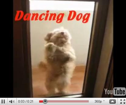 Собака - танцевака