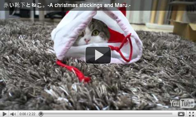 Кот Мару и рождественский чулок