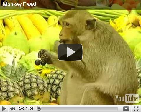 Monkey Feast/Праздник для обезьян