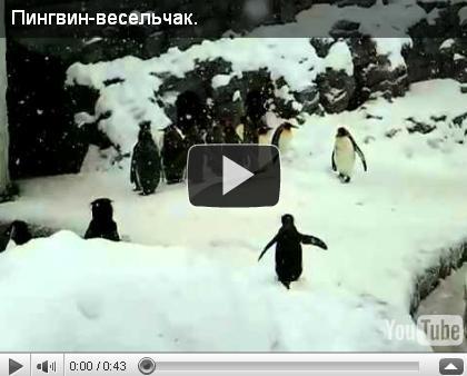 Пингвин - весельчак