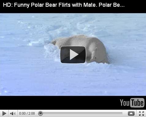 Забавный белый медведь