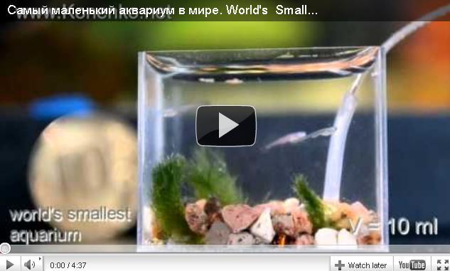Самый маленький в мире аквариум )