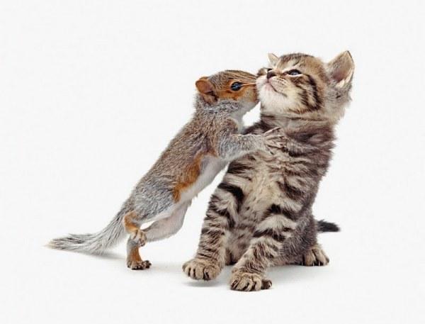 Животные  Джейна Бертона